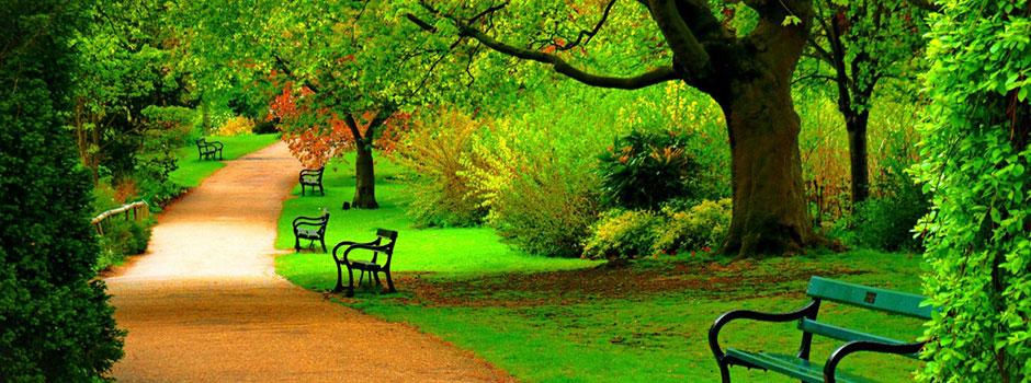 nature-spring-forest-park-6452
