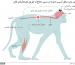 _92378107_monkey
